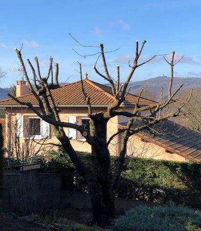 élagage Saint-Cyr-au-Mont-d'Or Saint-Didier-au-Mont-d'Or Caluire-et-Cuire